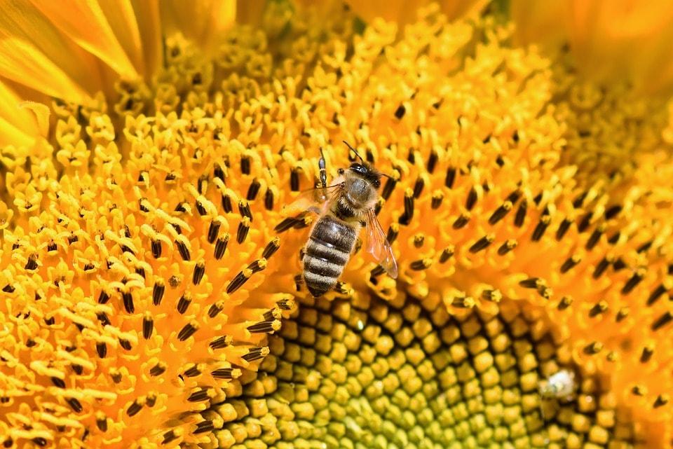 tiszta méhpempő